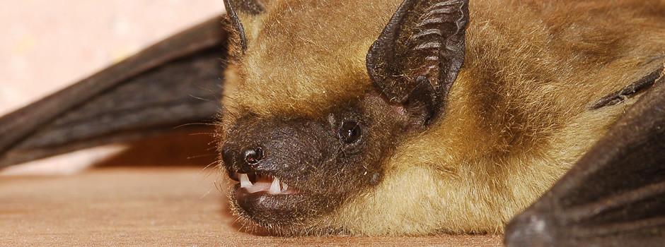bat-control