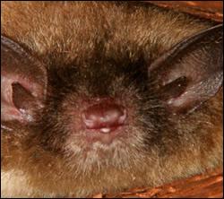 Bat control California