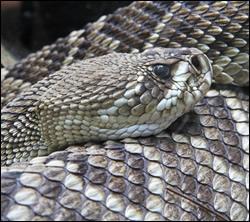 Snake control California